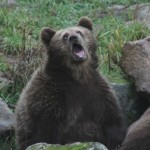 Content Strategy Bear